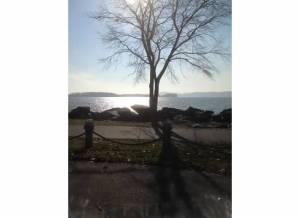 sunandtree